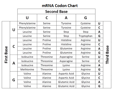 nucleotide chart Gallery