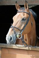 A photograph of a horse with its head outside of a stall
