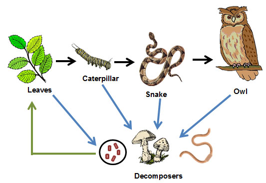 pics for gt decomposers clipart