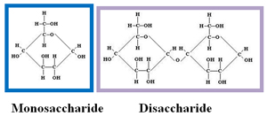 Image is a structural drawing of a monosaccharide and a disaccharide.