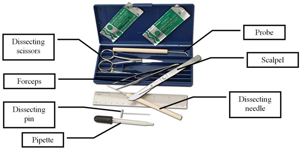 Worksheets Equipment Used In Biology Laboratory view resource equipment for biology texas gateway image shows a dissection kit with the following probe scalpel dissecting needle