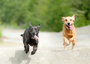 Image of two dogs runing.