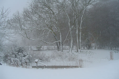 photo of winter pond, trees, and bird house covered in snow