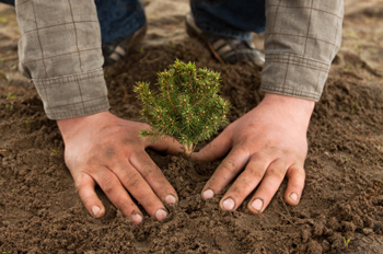 Photo of the hands and knees of someone packing the dirt down around a freshly embedded plant
