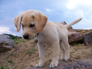 puppy looking attentive