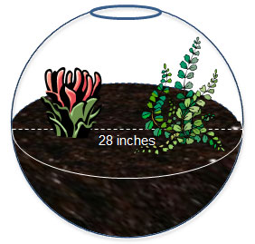 spherical-shaped terrarium with dimensions labeled
