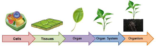 Organisms And Environments Levels Of Organization Texas Gateway
