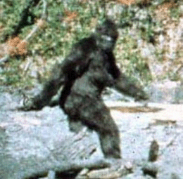The image is of a picture taken in 1967 of a supposed bigfoot or sasquatch.
